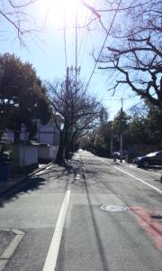 成城の桜並木